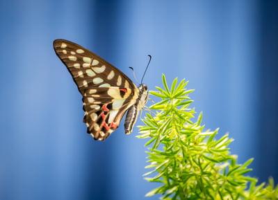 butterfly-P486N5F